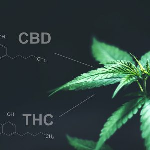 Cannabis contains almost 120 different active ingredients and the benefits of CBD for the skin have been widely touted as a miracle cure. What is the science behind this ingredient and how can you incorporate it into your treatment protocols